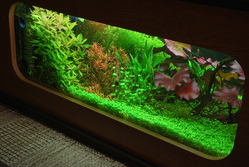 aquarium table basse (nouvel hardscape) Forum110