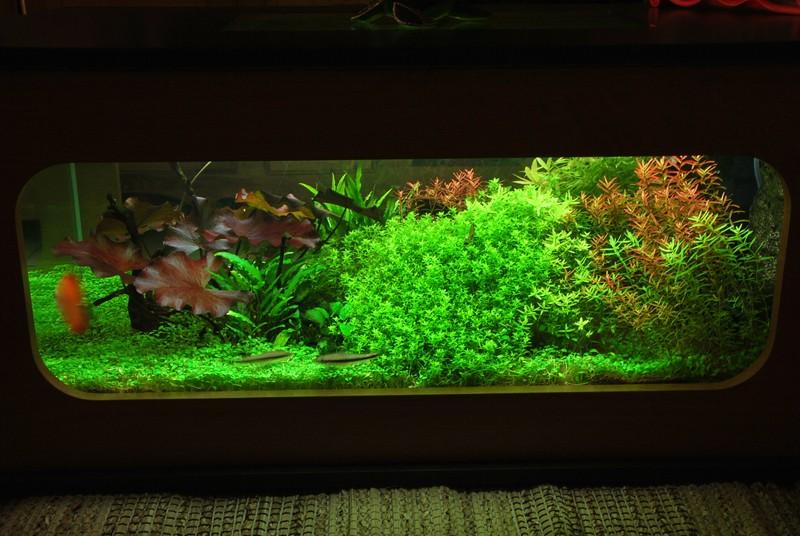 aquarium table basse (nouvel hardscape) Forum210
