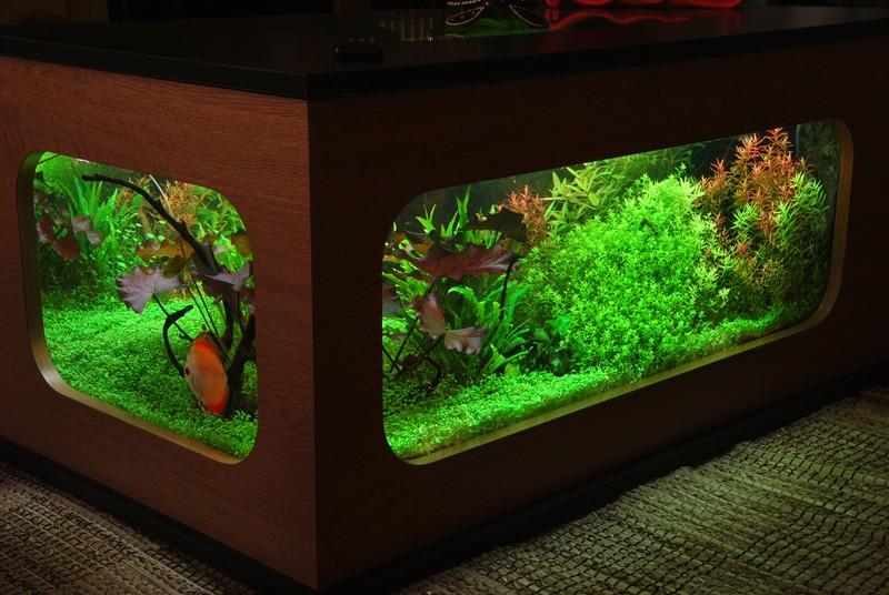 aquarium table basse (nouvel hardscape) Forum410