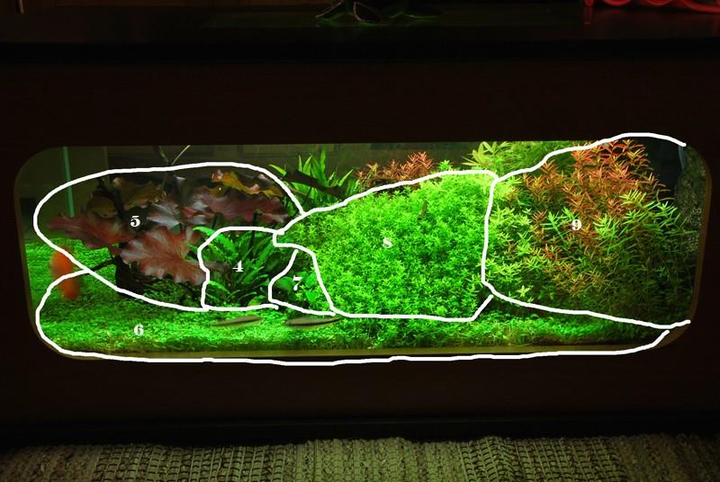 aquarium table basse (nouvel hardscape) Forum610