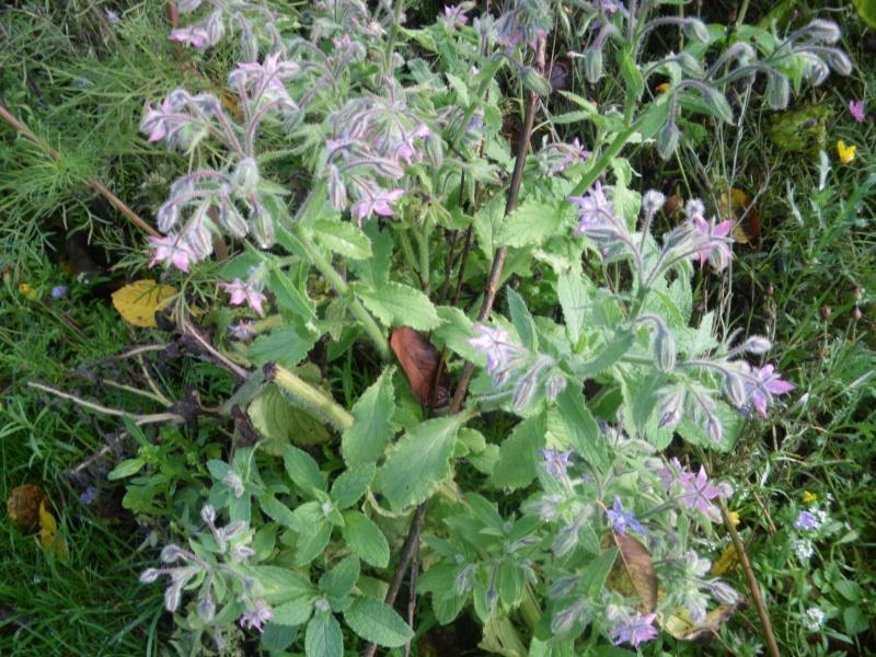 [Challenge] Identification de plantes sauvages avec votre guide Imgp0810
