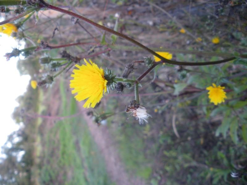 [Challenge] Identification de plantes sauvages avec votre guide Imgp0816