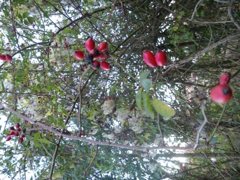 [Challenge] Identification de plantes sauvages avec votre guide Imgp0817