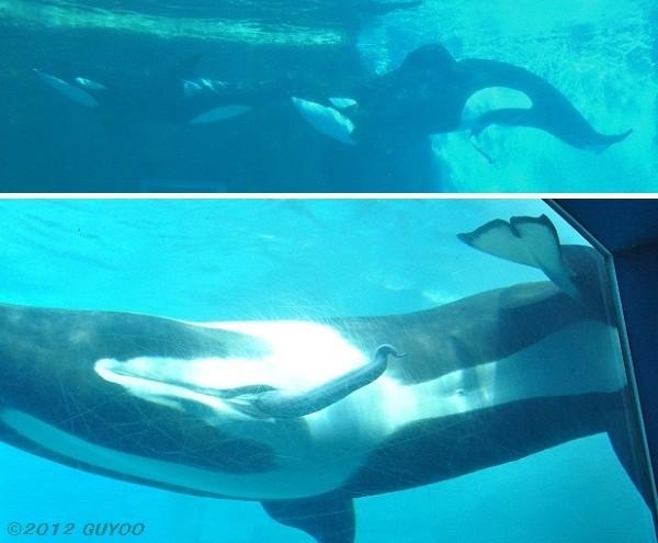 [News] Port of Nagoya aquarium 2012 - Page 2 010