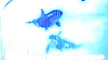 [News] Port of Nagoya aquarium 2012 - Page 4 Dddddd10