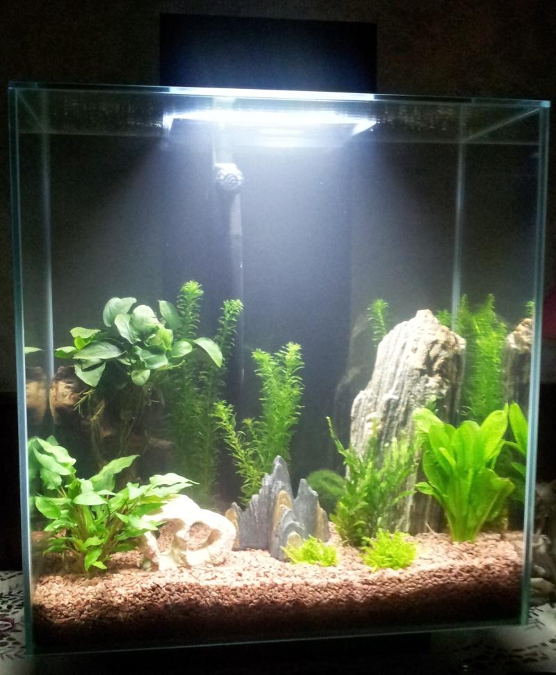 46 litres Fluval Edge 20121113