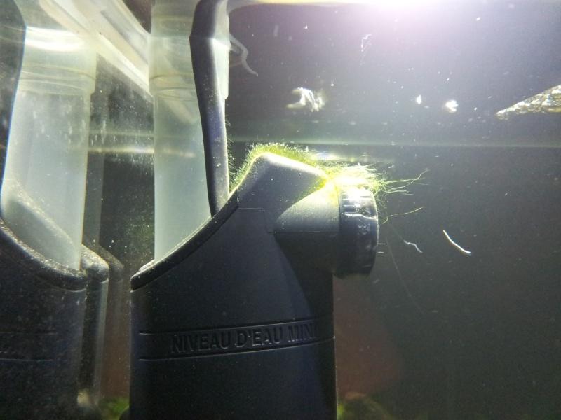46 litres Fluval Edge 20121114