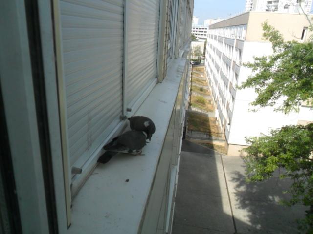 Un petit coquin qui attend ses graines Sam_4818