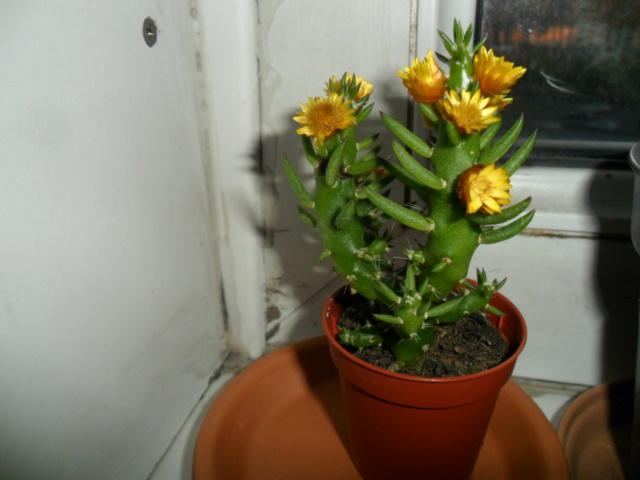 Mes bébés cactus - Page 6 Sam_4929