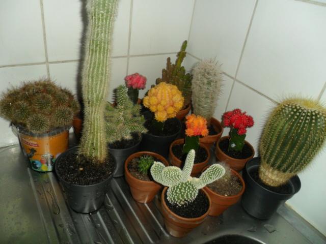 Mes bébés cactus - Page 6 Sam_5328