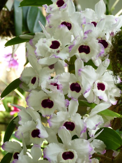 Orchideen-Neuzugang 2 - Seite 16 Lej110