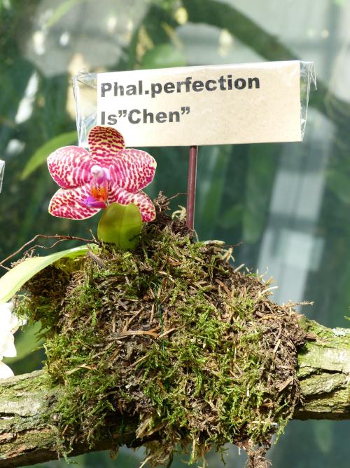 Orchideen-Neuzugang 2 - Seite 16 Lej310