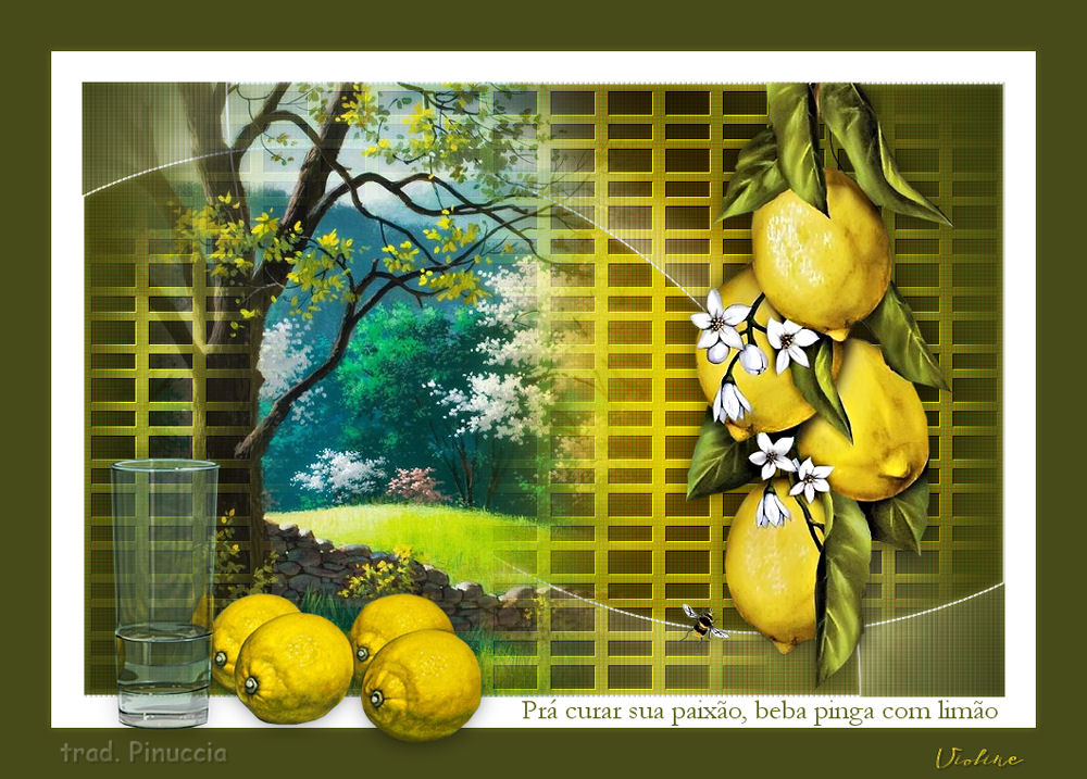 Top Citrons Creac274