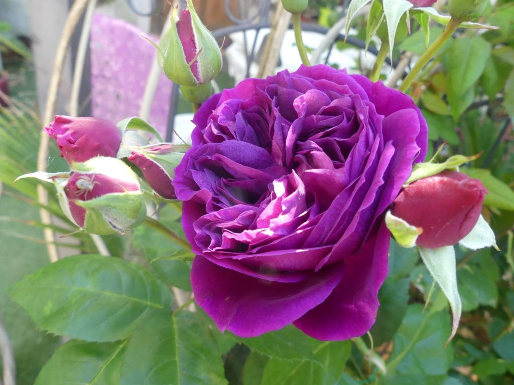 Rosier Purple Lodge 001102