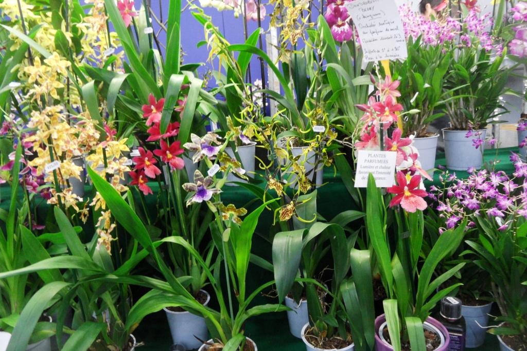 Salon orchidées Bouc-Bel-Air 00120
