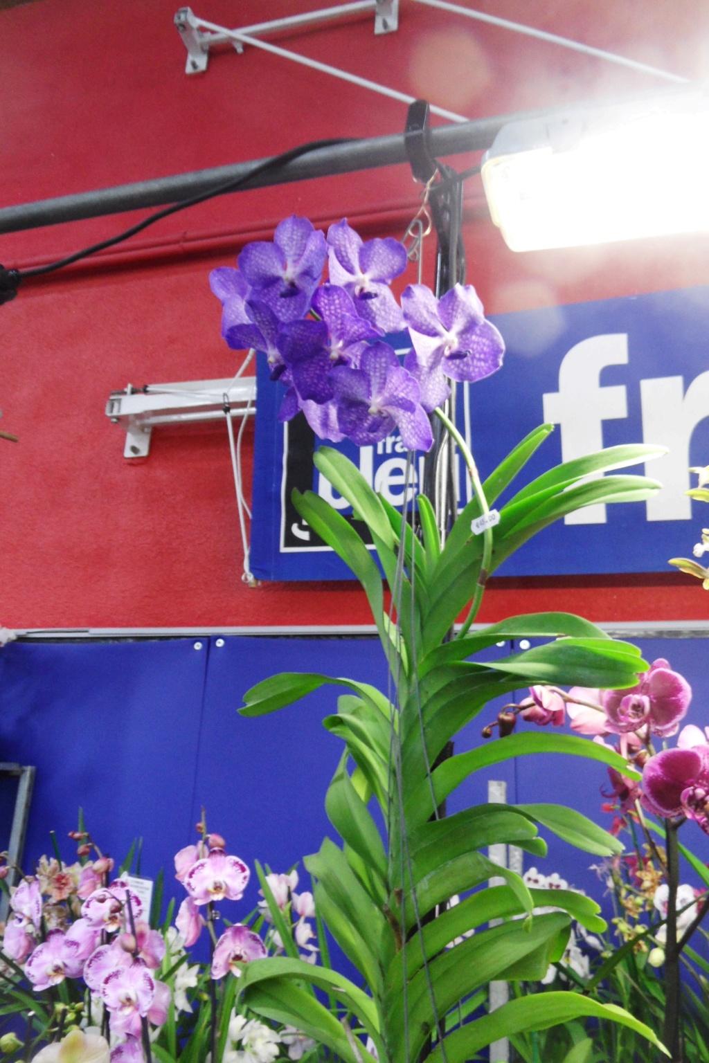 Salon orchidées Bouc-Bel-Air 00316