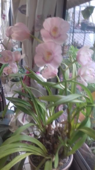 Orchidée de chez Hugo - Page 2 00351