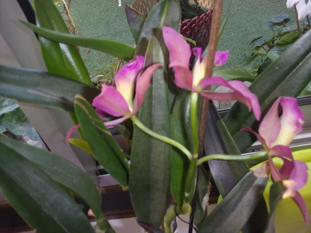 Mes plantes dans la véranda - Page 8 00433