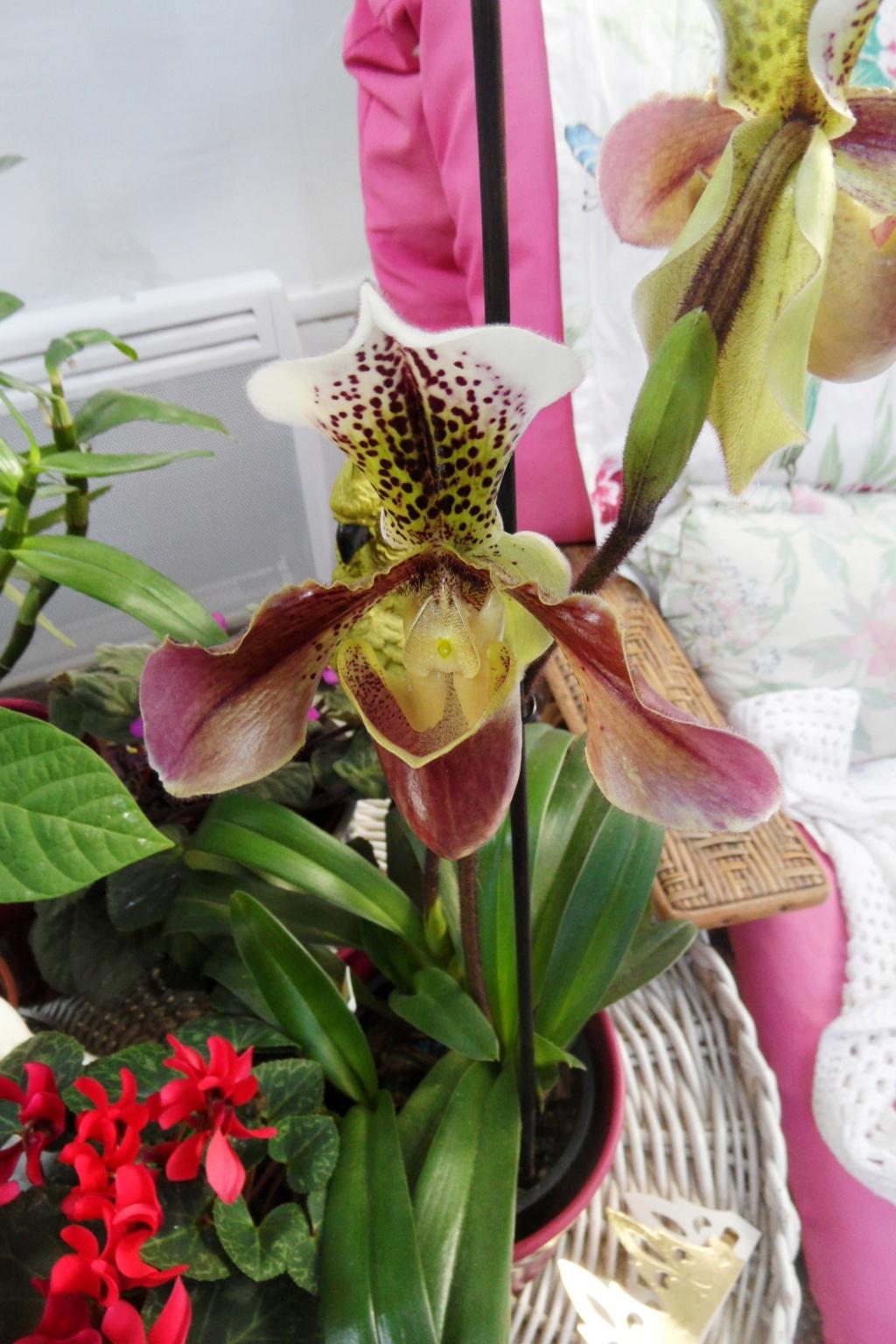 Orchidée de chez Hugo - Page 2 00440