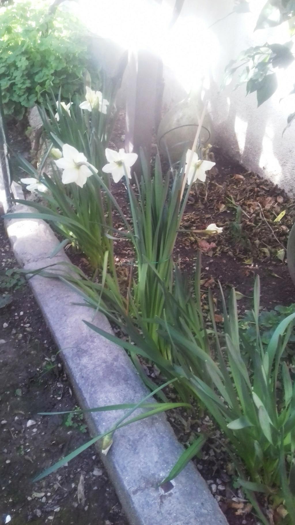 Mon petit jardin de ville - Page 10 00458