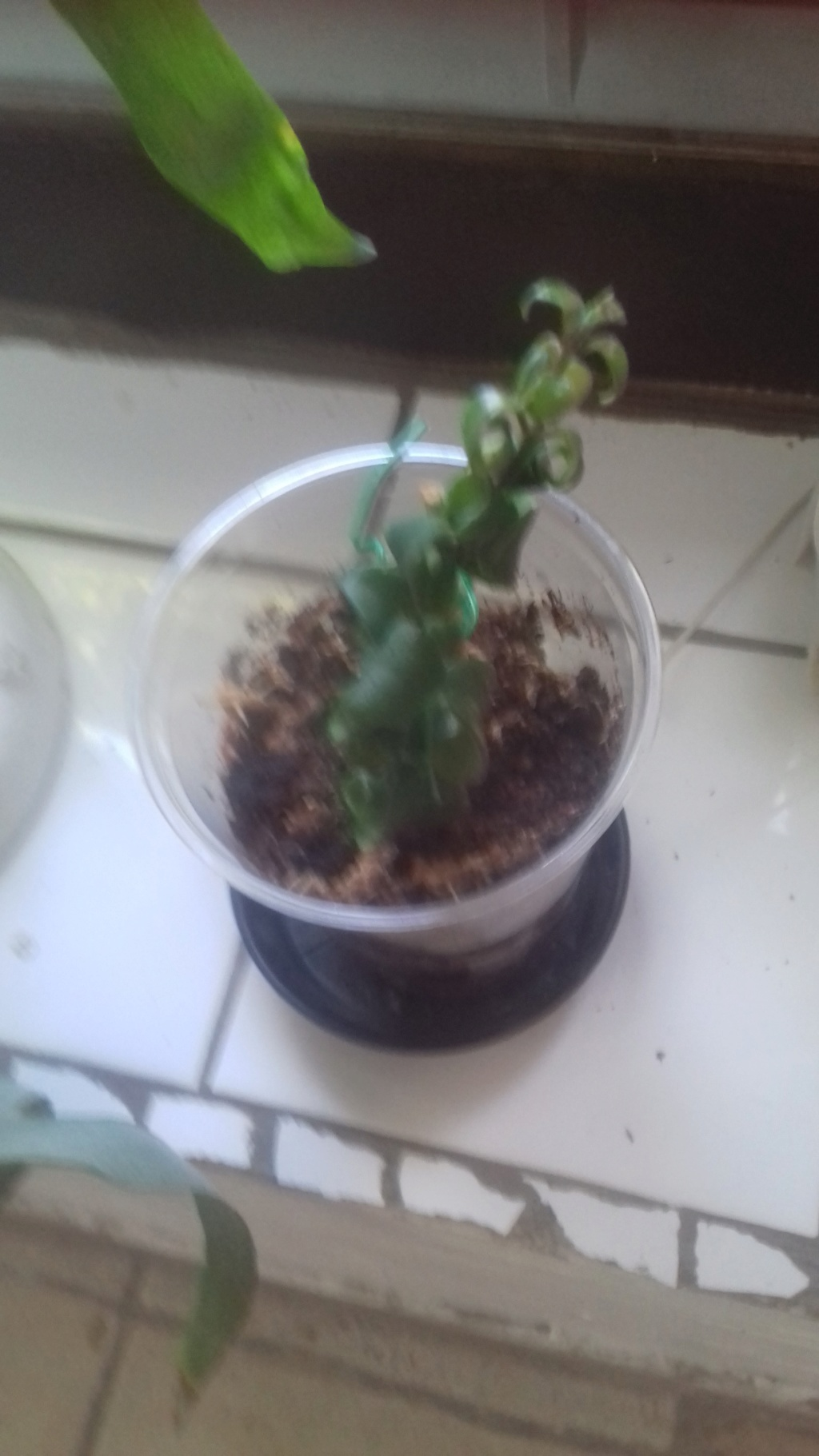 Mes plantes dans la véranda - Page 10 00643