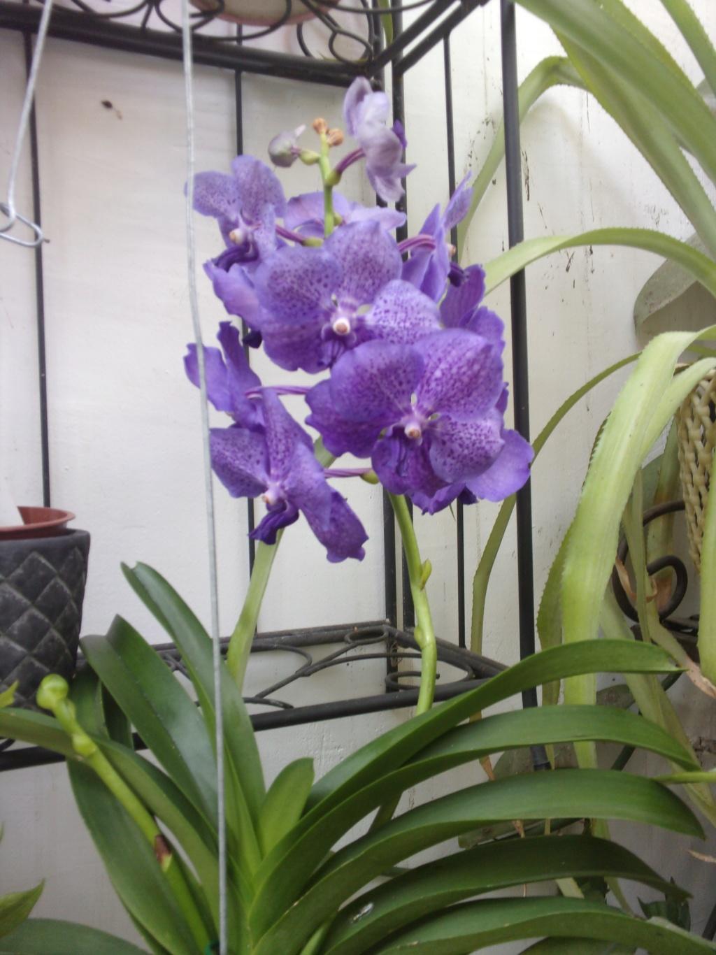 Orchidée de chez Hugo - Page 2 00646