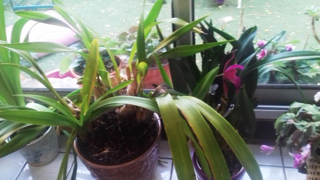 Mes plantes dans la véranda - Page 10 00754