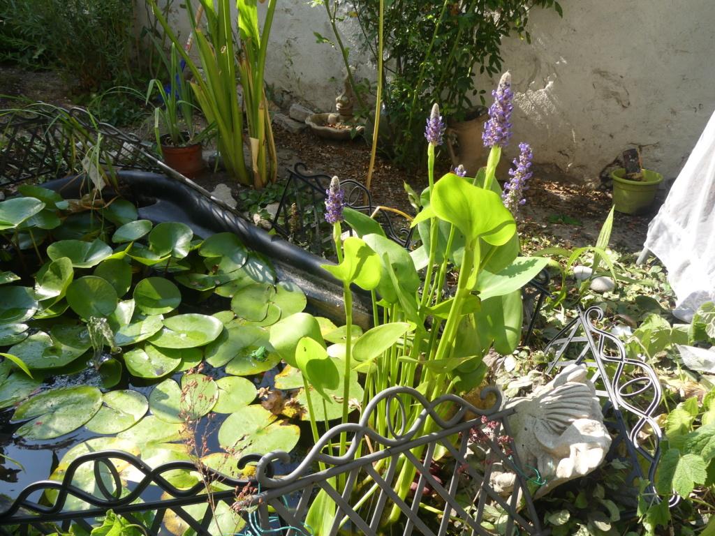 Mon petit jardin de ville - Page 20 00792