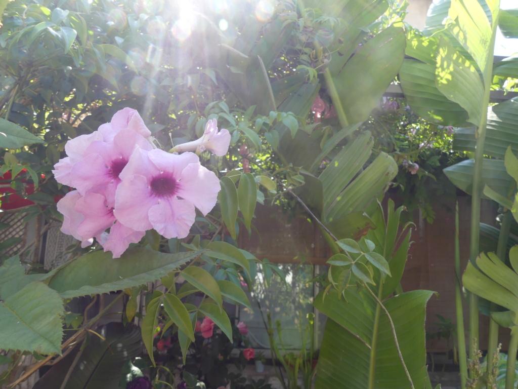 Mon petit jardin de ville - Page 20 00793
