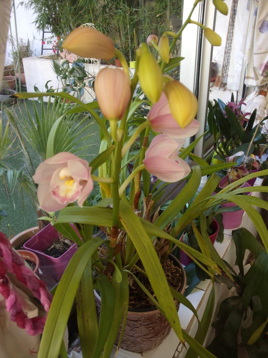 Mes plantes dans la véranda - Page 8 00840