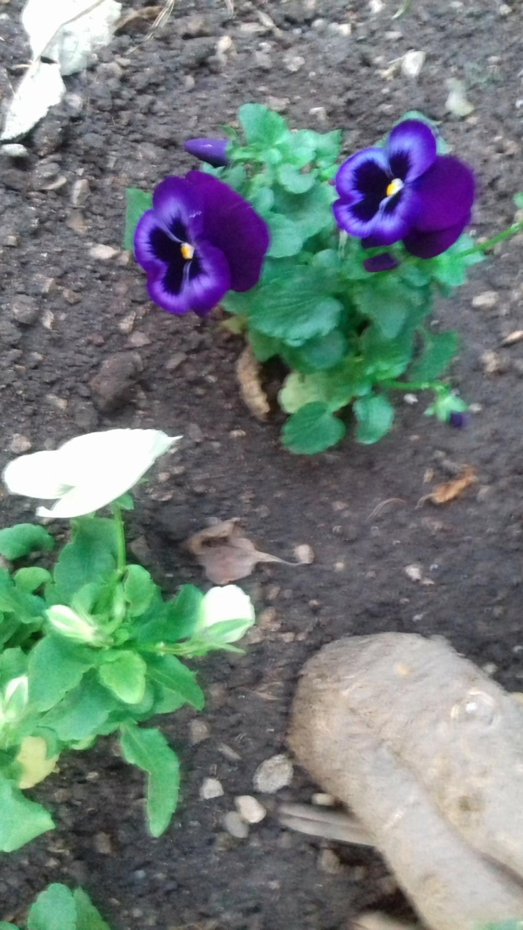 Mon petit jardin de ville - Page 9 01052