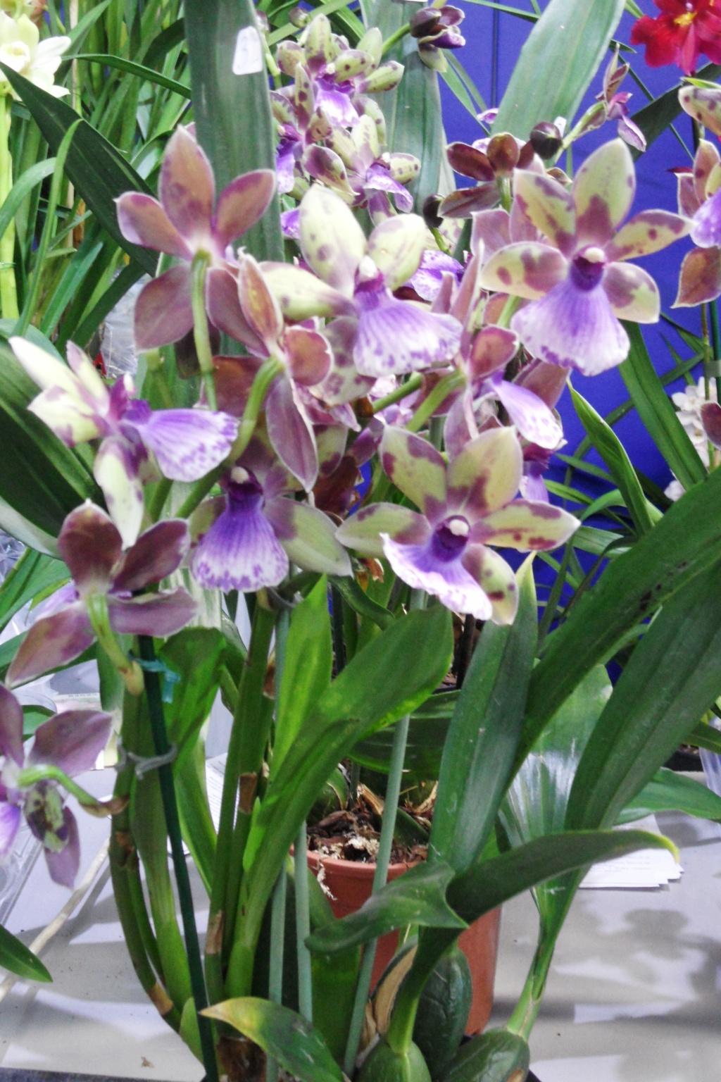 Salon orchidées Bouc-Bel-Air 01315