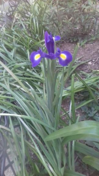 2020 - Iris ! 01337