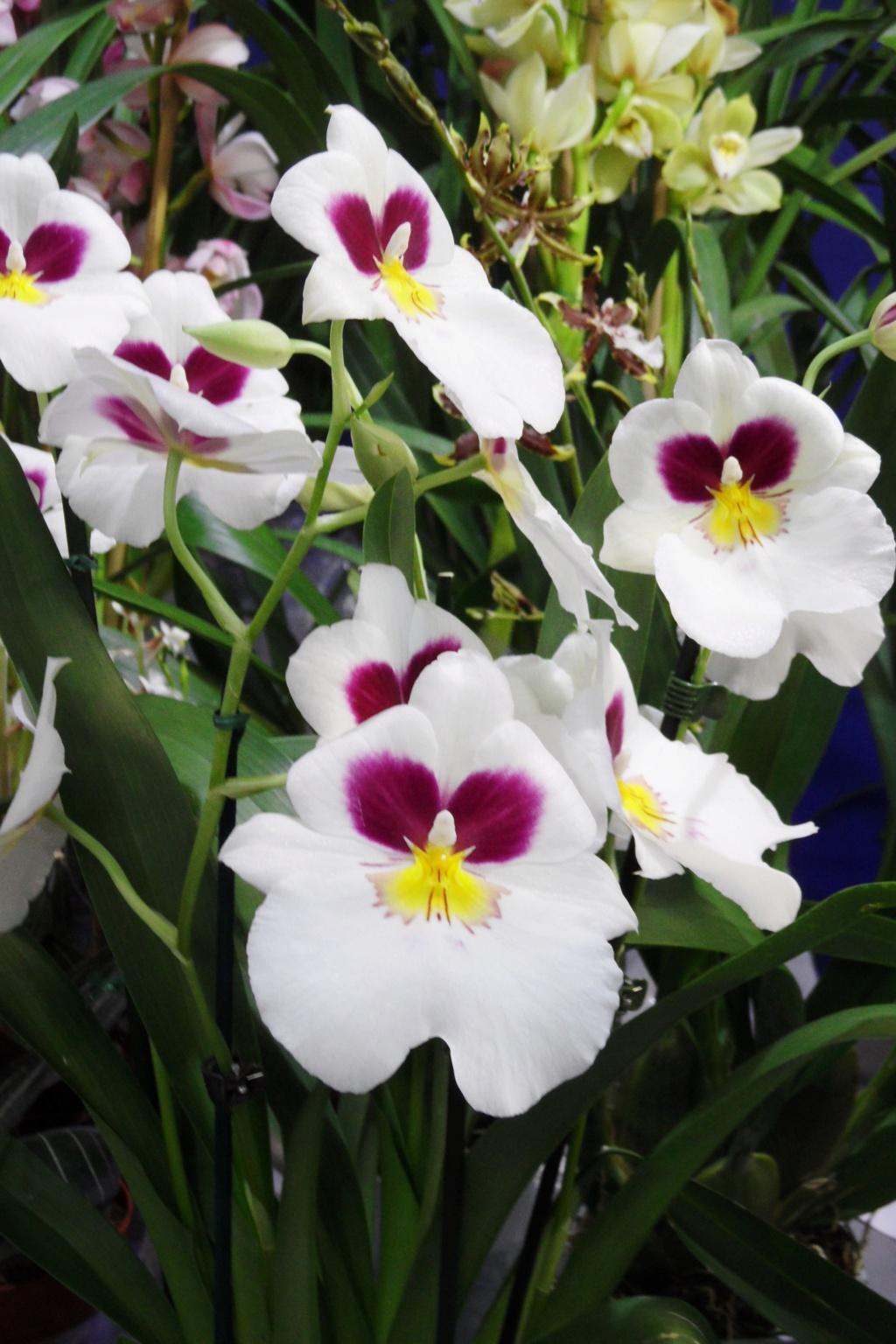 Salon orchidées Bouc-Bel-Air 01412