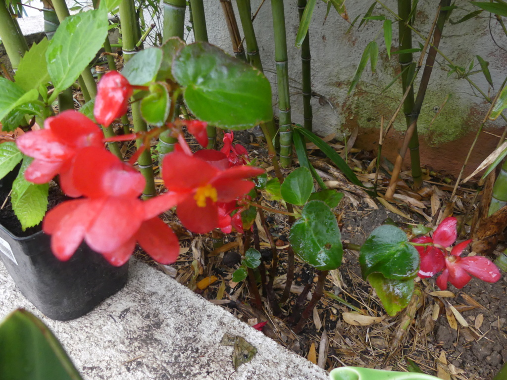 Mon petit jardin de ville - Page 17 01442