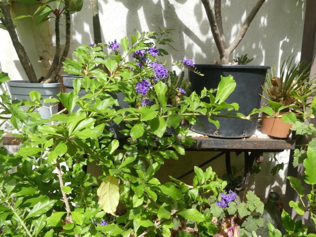 Mon petit jardin de ville - Page 22 01451