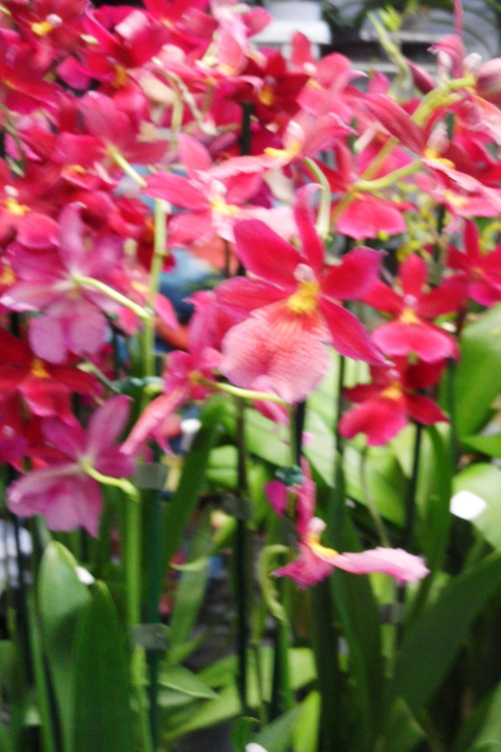 Salon orchidées Bouc-Bel-Air 01510