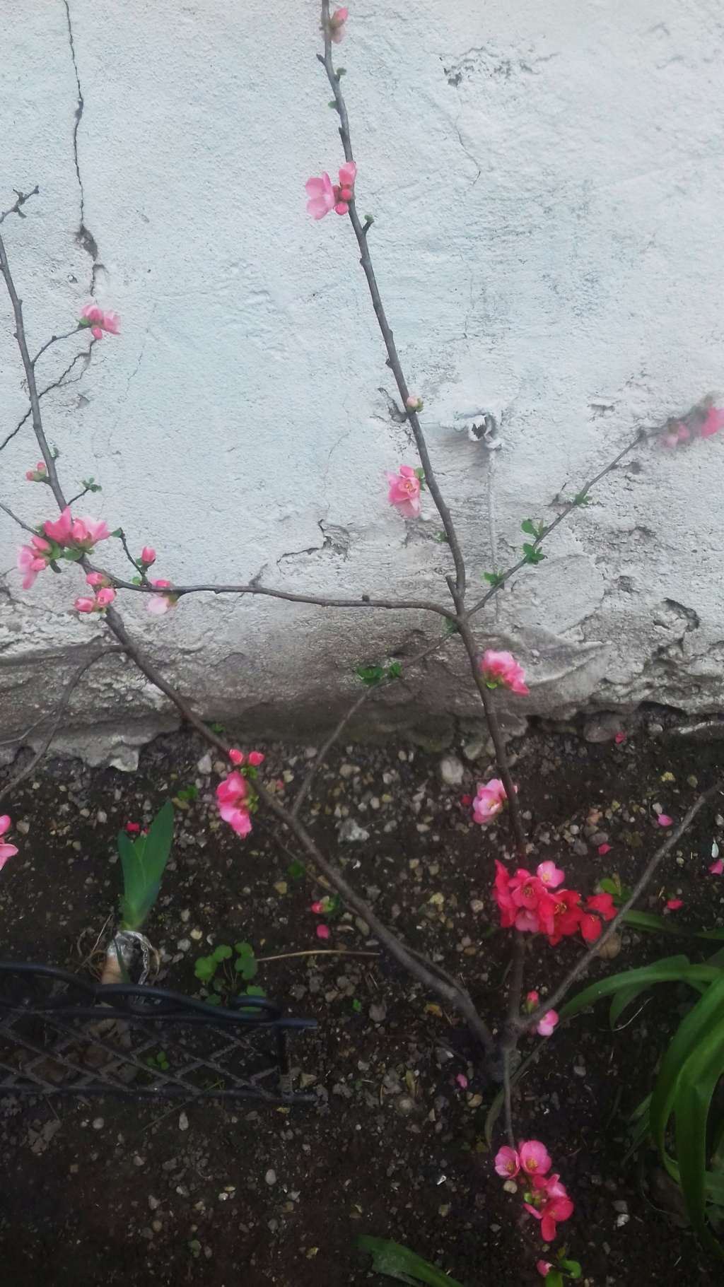 Mon petit jardin de ville - Page 10 01549