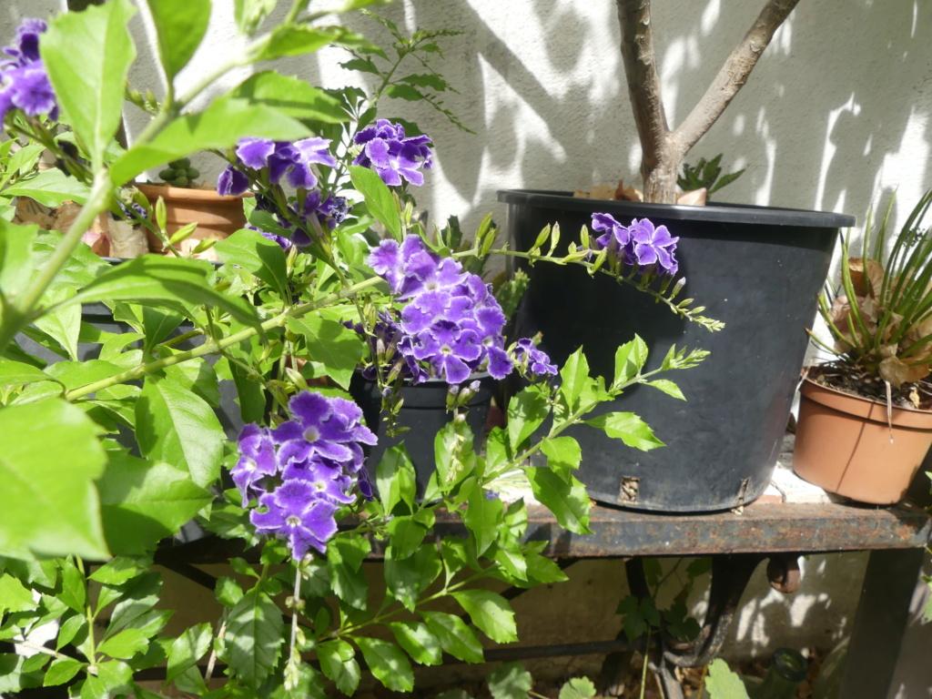 Mon petit jardin de ville - Page 22 01569