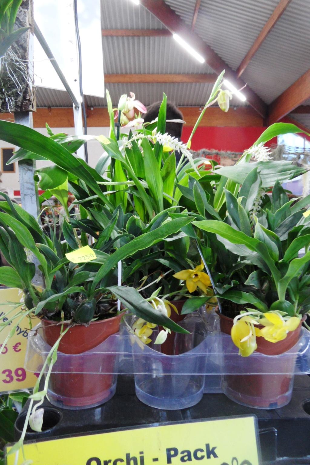 Salon orchidées Bouc-Bel-Air 01611