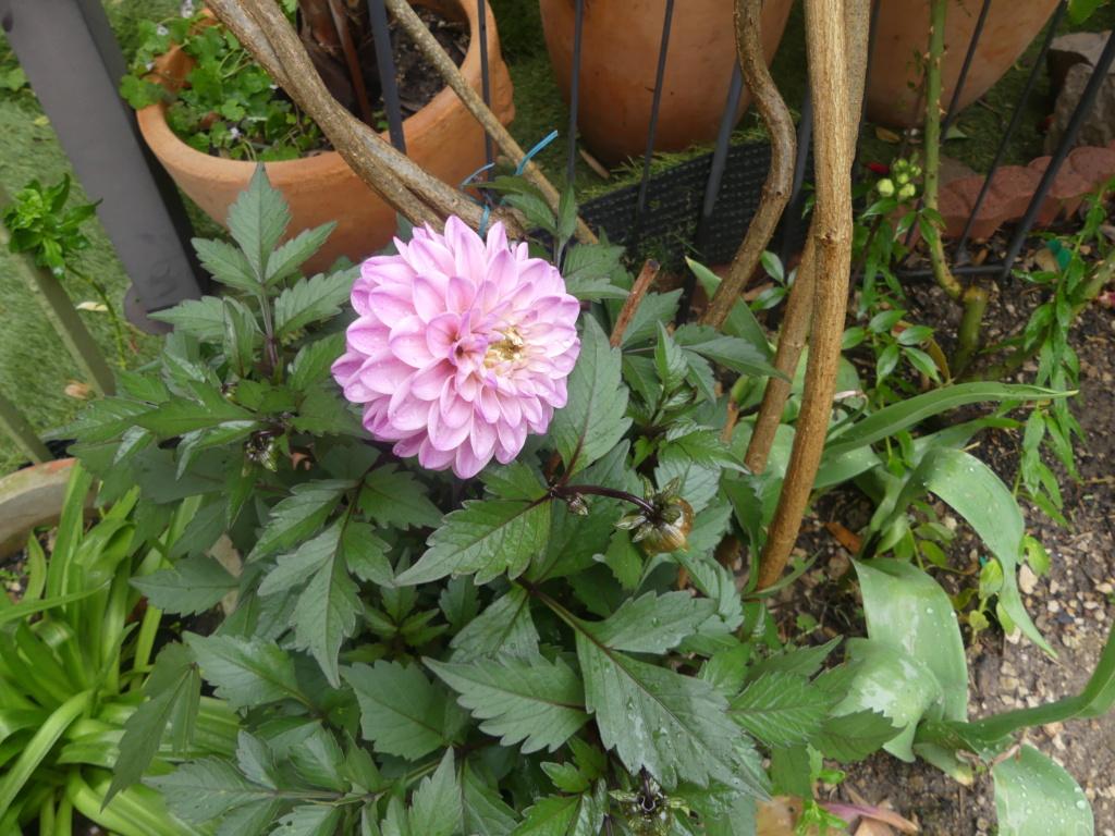 Mon petit jardin de ville - Page 17 01647
