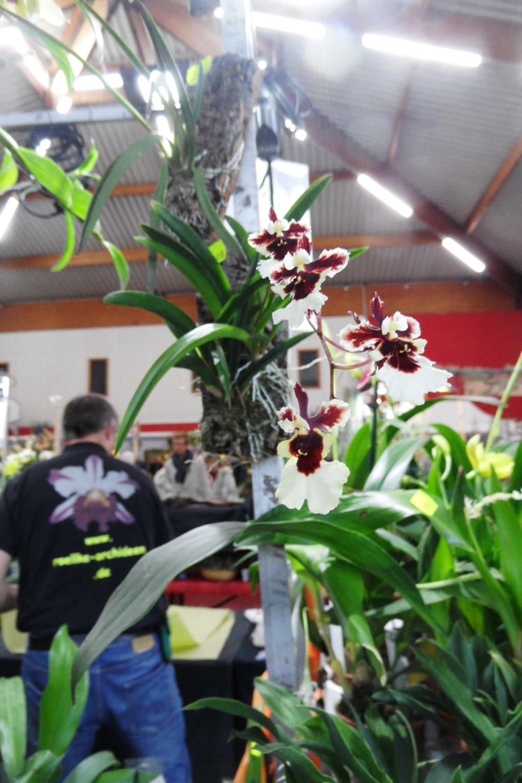Salon orchidées Bouc-Bel-Air 01711