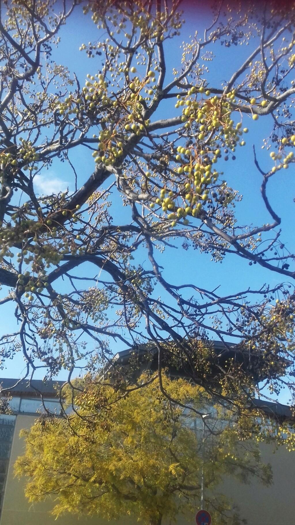 Quel est donc cet arbre ? 01734