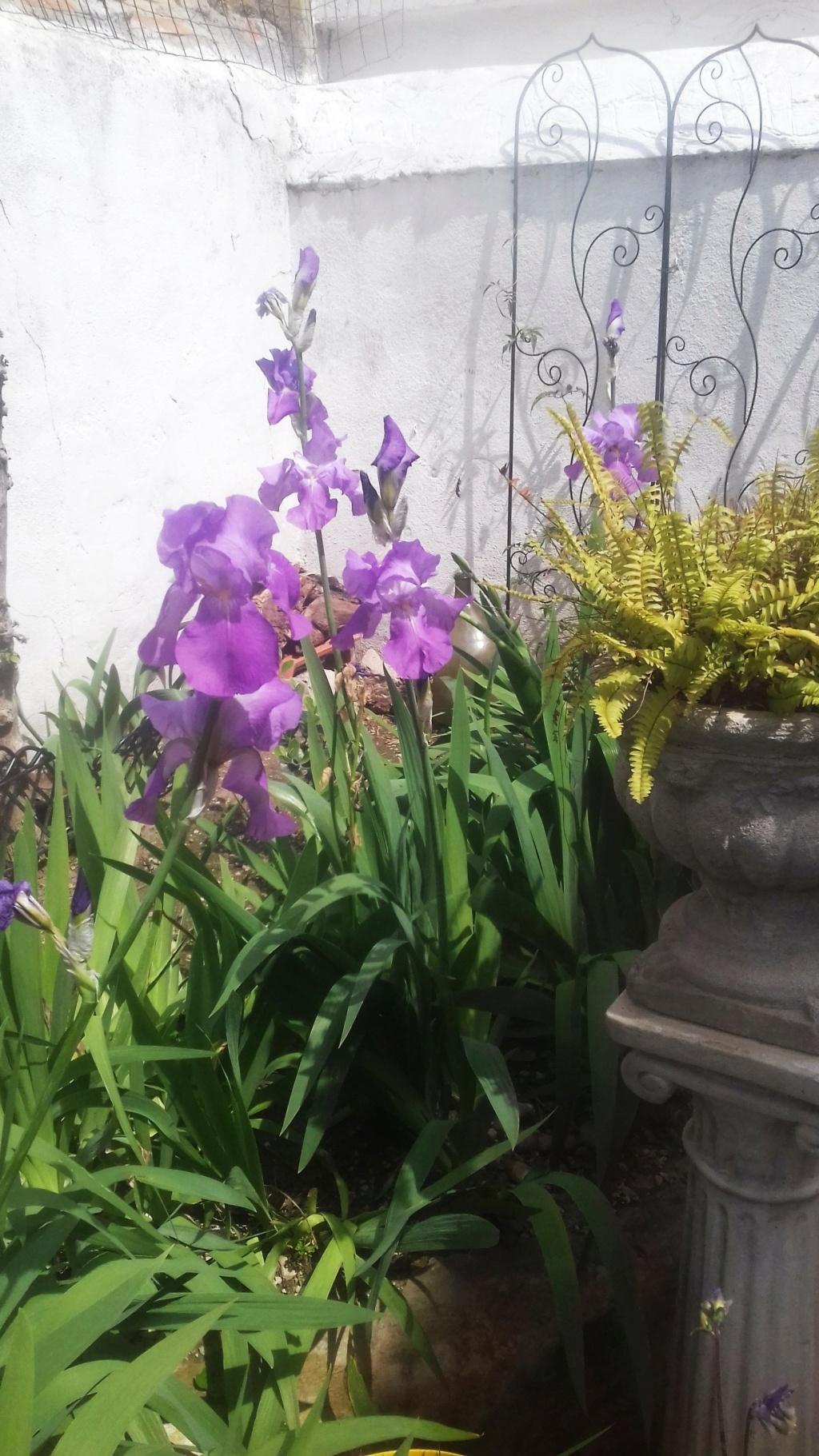 Floraison d'iris de 2017 ....... à 2021 - Page 20 01843