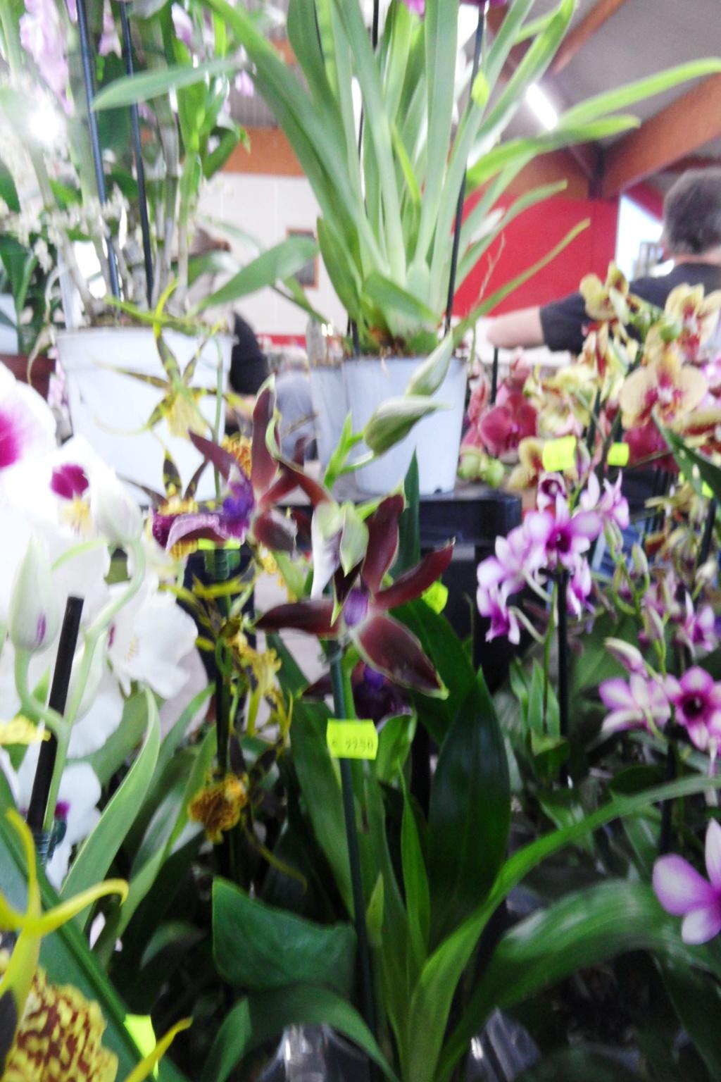 Salon orchidées Bouc-Bel-Air 01910