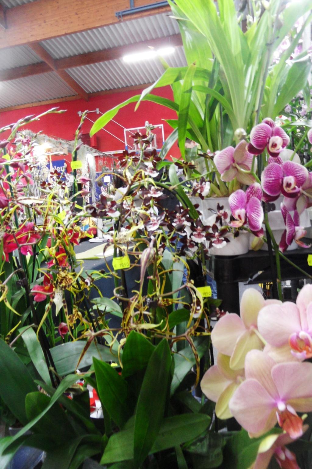 Salon orchidées Bouc-Bel-Air - Page 2 02110
