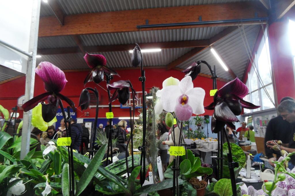 Salon orchidées Bouc-Bel-Air - Page 2 02210