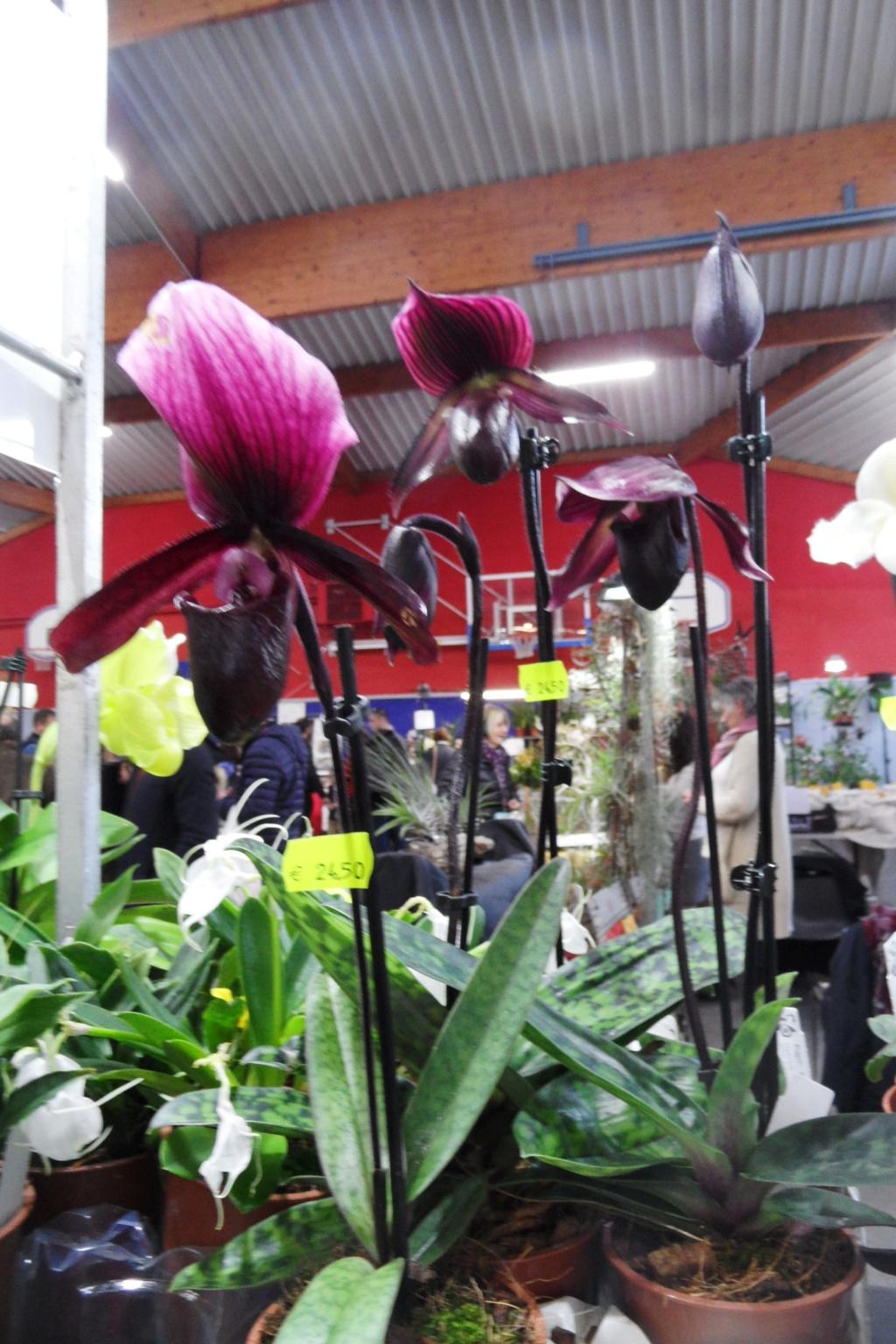 Salon orchidées Bouc-Bel-Air - Page 2 02310