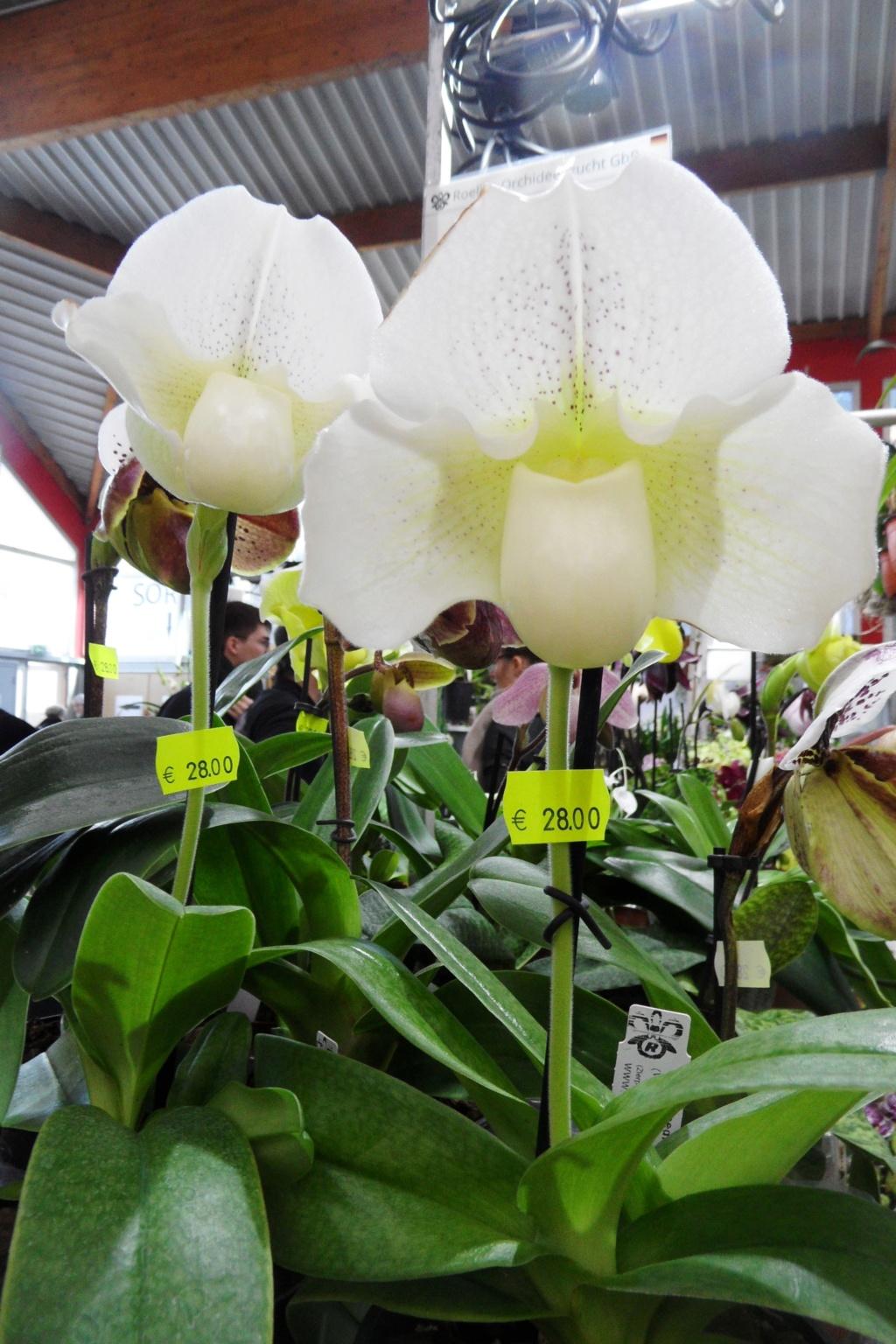Salon orchidées Bouc-Bel-Air - Page 2 02410