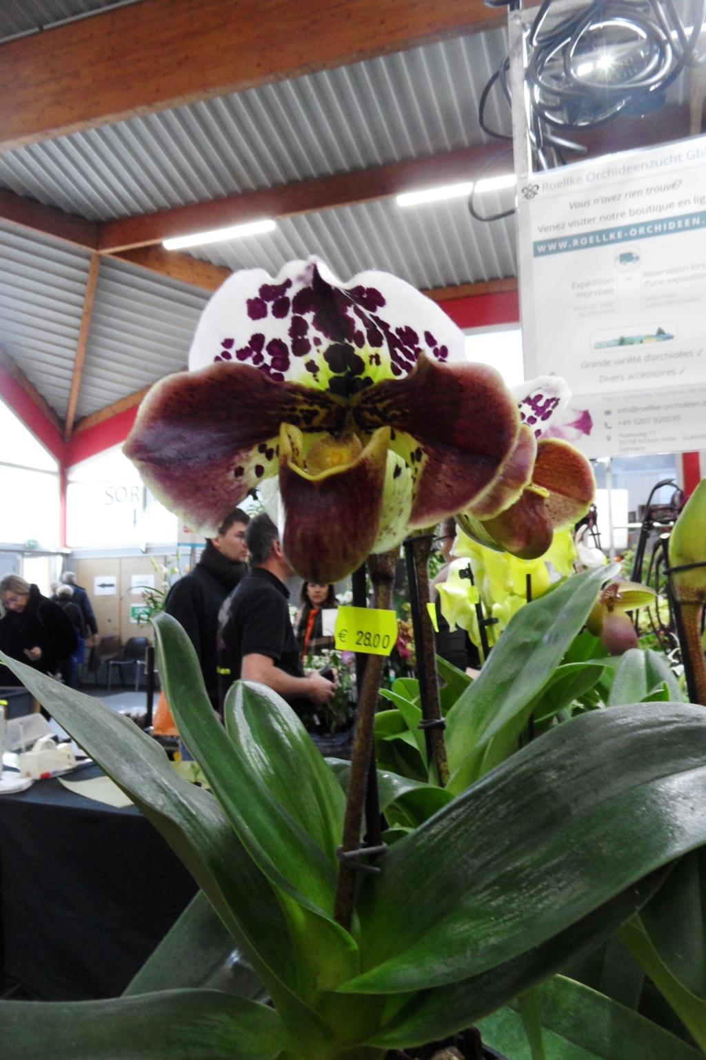 Salon orchidées Bouc-Bel-Air - Page 2 02510